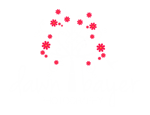 Dawn Bayer Photography